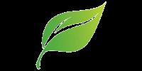 78-788239_cartoon-leaf-removebg-preview
